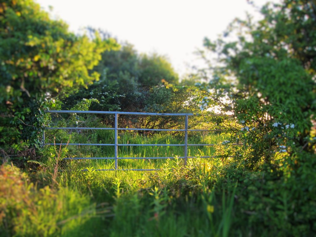 gate in a field in Ireland - Gluten-free potato farls recipe